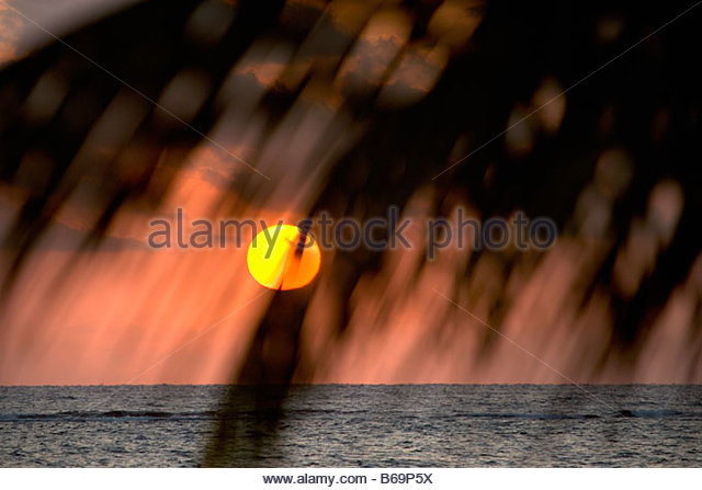 Palm Leaves Over Water Stock Photos & Palm Leaves Over Water Stock ...