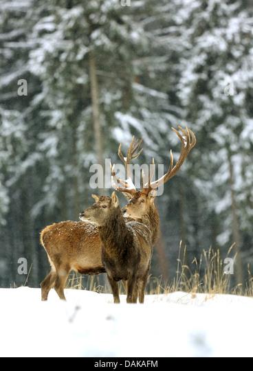Landscaping Ties Red Deer : Erzgebirge mountains stock photos images alamy