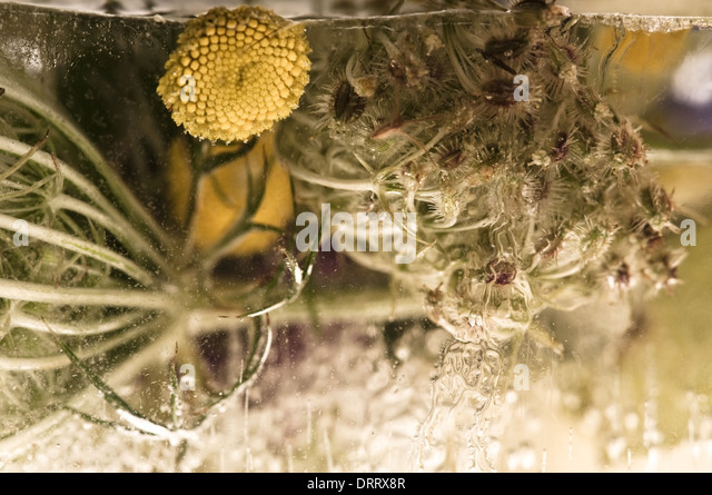 Ice flowers stock photos ice flowers stock images alamy for 97 the terrace ocean grove