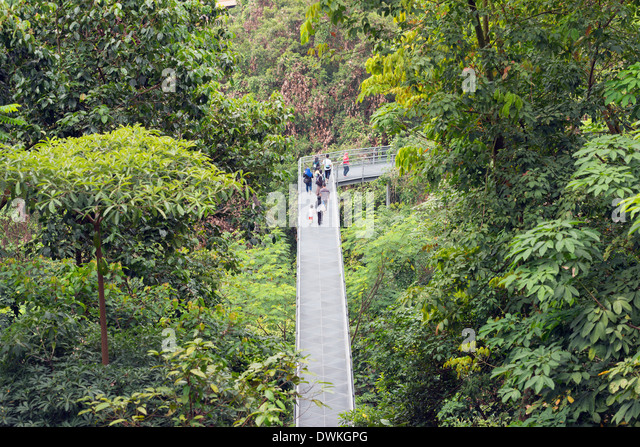 Canopy walk Southern Ridges Singapore Southeast Asia Asia - Stock Image & Canopy Walk Stock Photos u0026 Canopy Walk Stock Images - Alamy