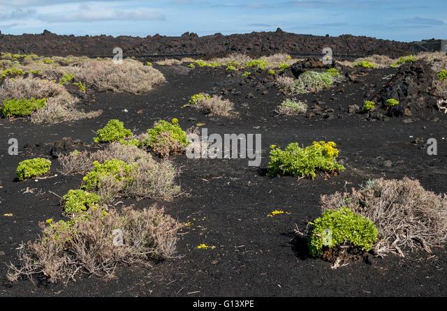 fertile soil volcano - photo #16