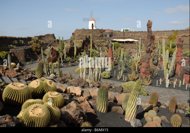 jardin de cactus the cactus garden near guatiza in lanzarote designed by artist cesar