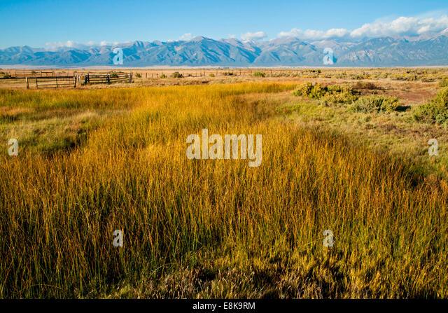 Ornamental Grasses Kenya : Bulrushes in marsh alkali flats stock image