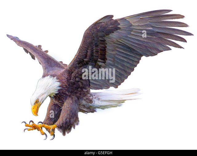 Animal Drawing Stock Photos & Animal Drawing Stock Images ...