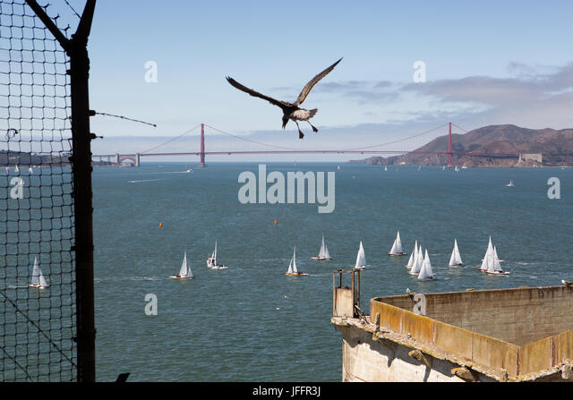 A bird flying over the Alcatraz Federal Penitentiary. A scenic view of the Golden Gate Bridge and sailboats. - Stock Image