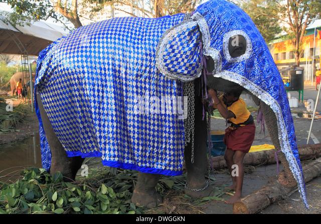 Elephant Festival Sri Lanka Stock Photos & Elephant ...