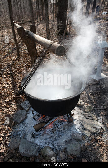 large cast iron pots being used to reduce sugar maple sap to syrup stock image