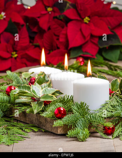 Christmas holly boughs stock photos