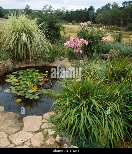 Small garden pond summer stock photos small garden pond for Garden pond edging
