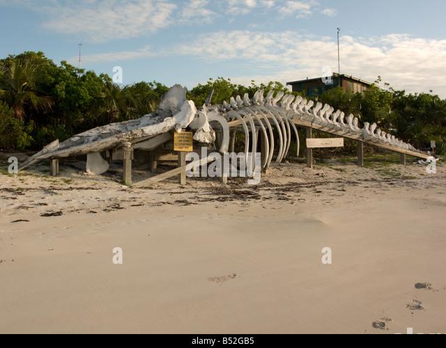 Whale skeleton on beach - photo#17