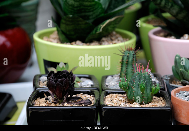 Potted succulents stock photos potted succulents stock Cactus pots for sale
