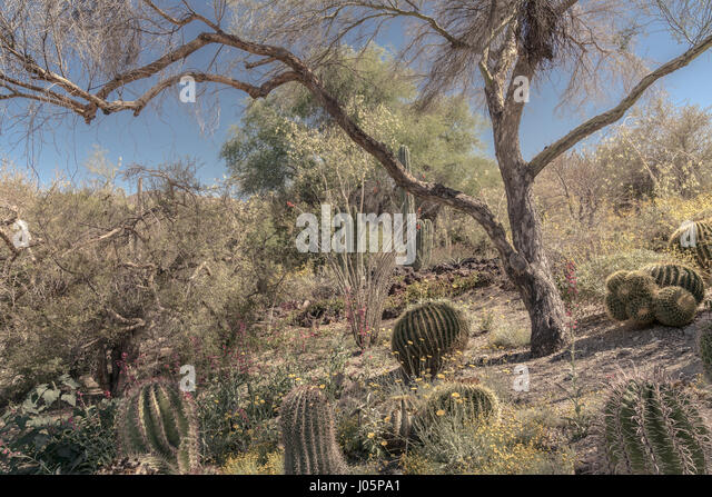 desert-landscape-with-one-prominent-tree