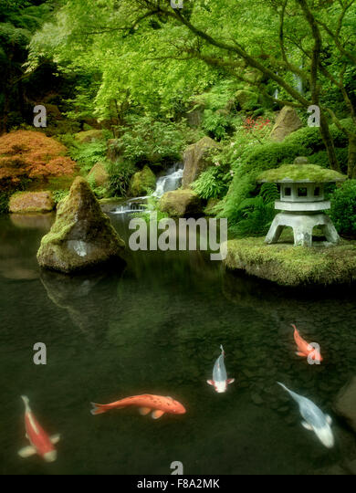 Koi fish in pond stock photos koi fish in pond stock for Japanese garden san jose koi fish