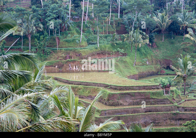Terrace farming people stock photos terrace farming for Terrace cultivation