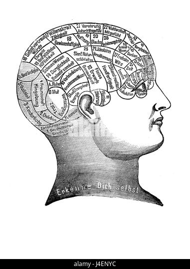 philosophy brain stock photos  u0026 philosophy brain stock