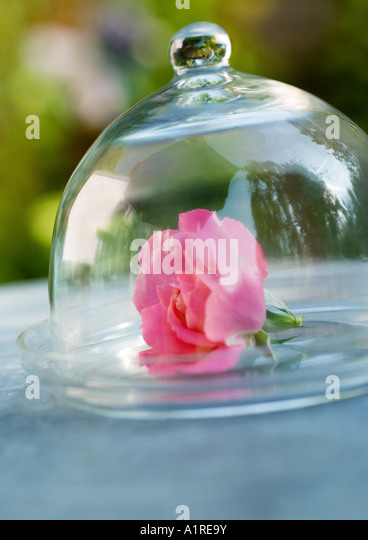 Glass domed stock photos glass domed stock images alamy for Rose under glass