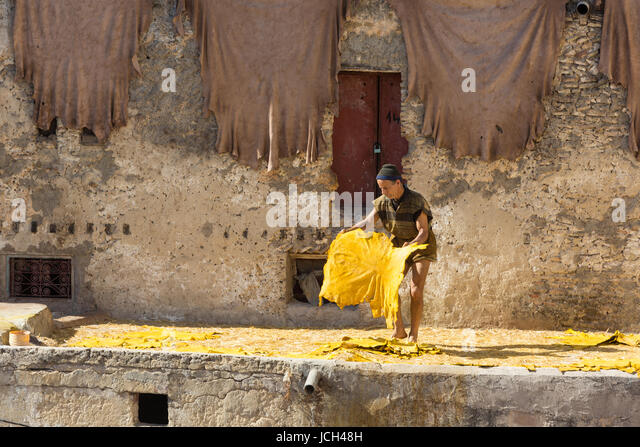 A man lays out a dyed yellow goatskin to dry in the hot Moroccan sun on the rooftop of a tannery in Fez, Morocco. - Stock Image