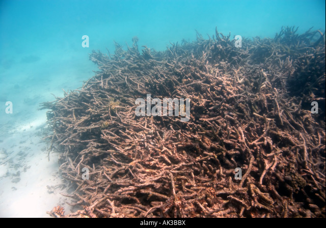Stressed Coral Stock Photos Amp Stressed Coral Stock Images