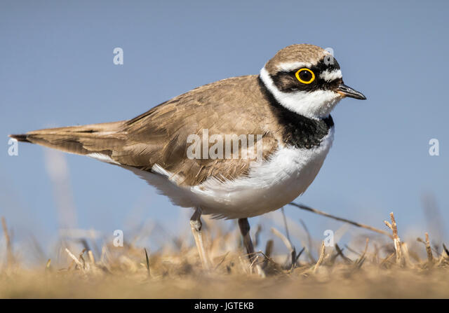 hindu singles in plover The ventana chapter offers  populations of western snowy plover since 1999 ventana chapter attorney larry silver has  single-family and multi-family.