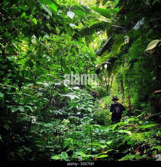 Jungle Mexico Stock Photos & Jungle Mexico Stock Images