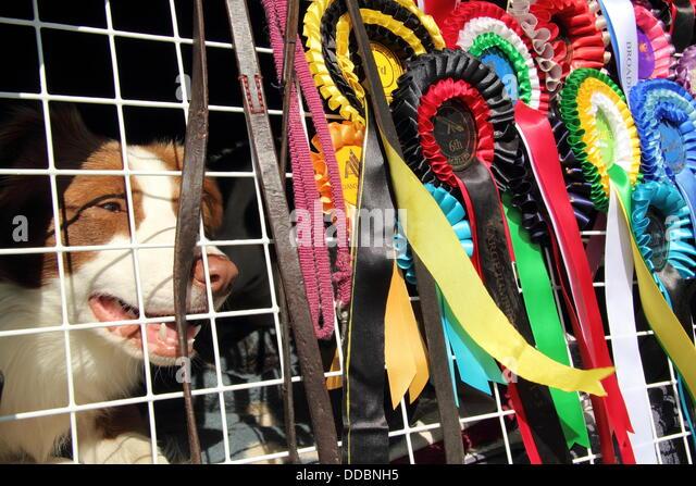 Turriff Dog Show