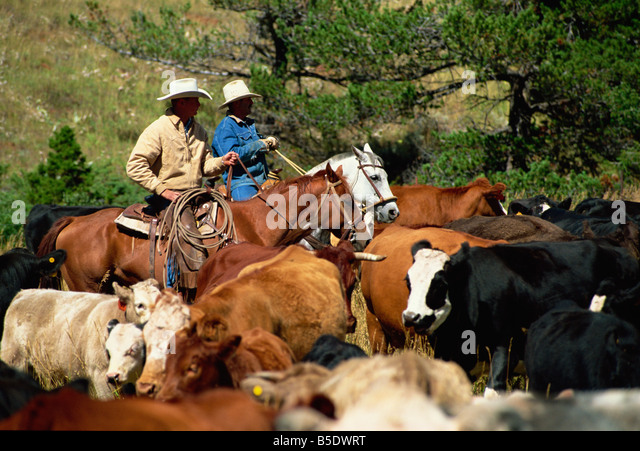 Image result for cattle ranches of north america