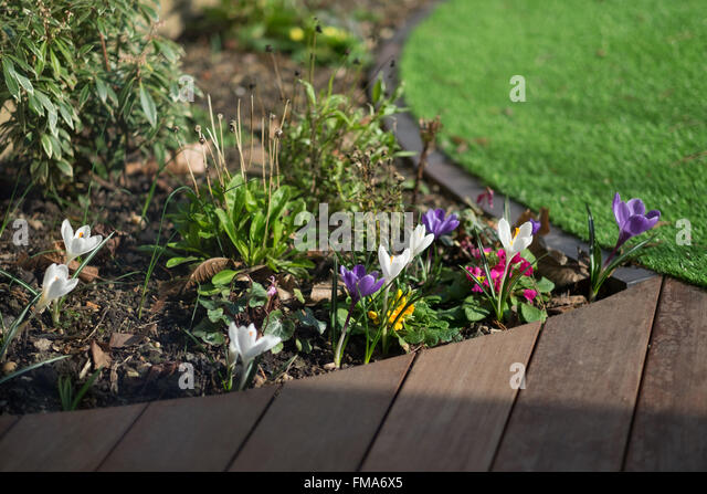 close up detail of a contemporary urban garden design with circular lawn and hardwood decking