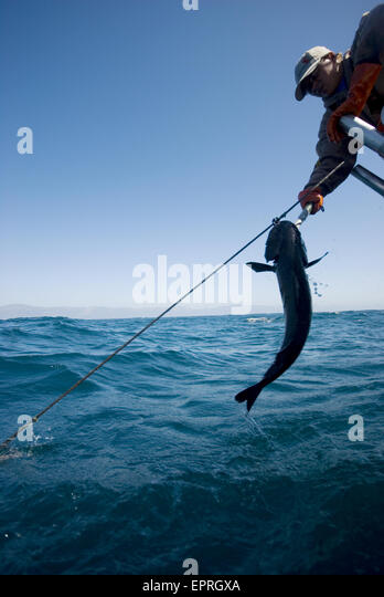 Sable fish stock photos sable fish stock images alamy for Big sur fishing