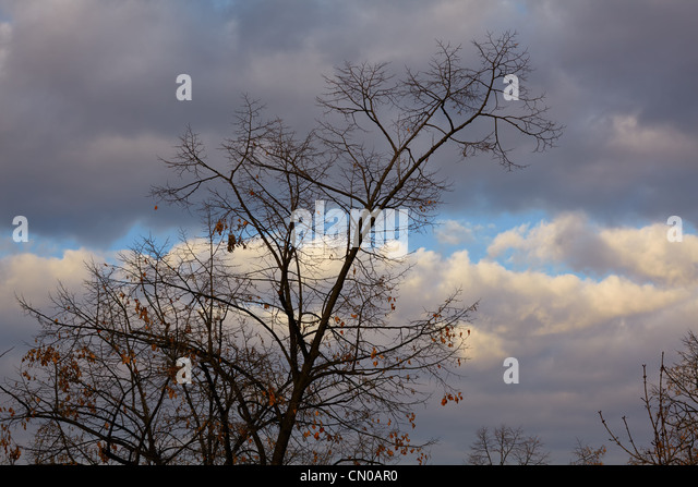 Contemporary Overcast Sky Branches In Autumn Against An Stock Image Inside Decor