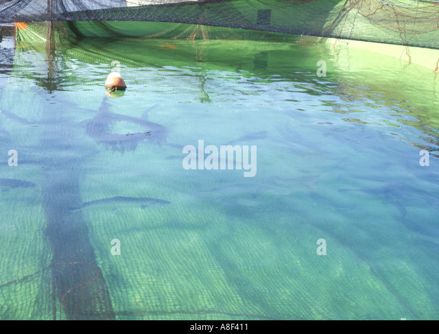 Sea lice stock photos sea lice stock images alamy for Can head lice transfer in swimming pools