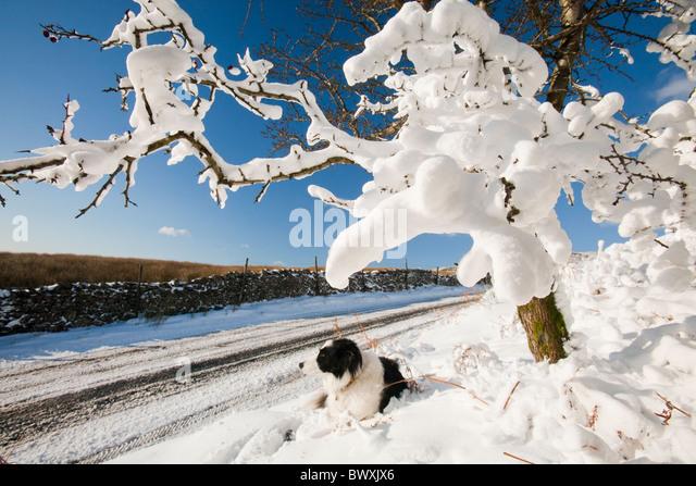 Snow Drift Granite : Snow drift stock photos images alamy