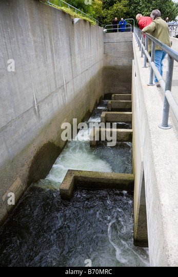 Ballard locks stock photos ballard locks stock images for Ballard locks fish ladder