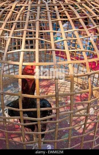 cock cage globen thai