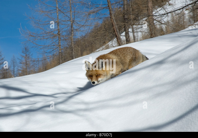 Canidae Stock Photos Amp Canidae Stock Images Alamy