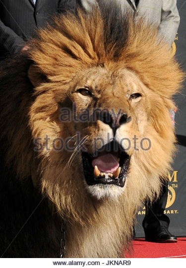 Mgm Lion Stock Photos Amp Mgm Lion Stock Images Alamy