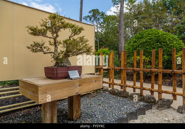 Bamboo Bonsai Stock Photos Bamboo Bonsai Stock Images Alamy