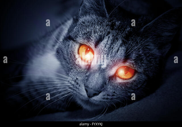 Black Cat With Pink Scary Eyes: Scary Cat Stock Photos & Scary Cat Stock Images
