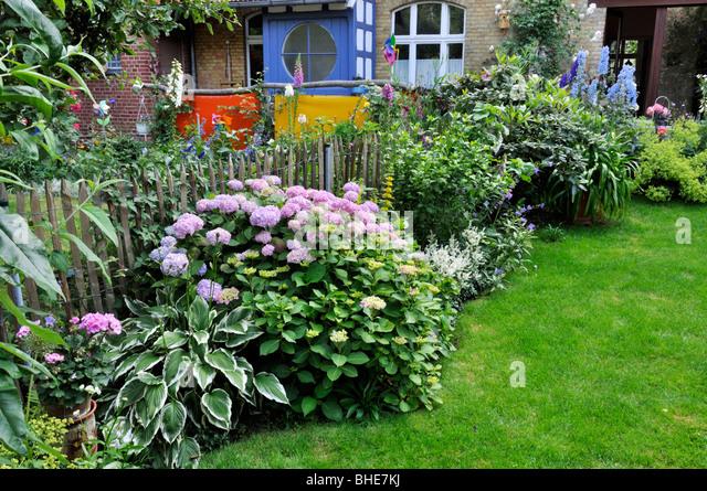 Garden Border Hydrangea Stock Photos Garden Border