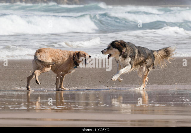 two dogs meet game