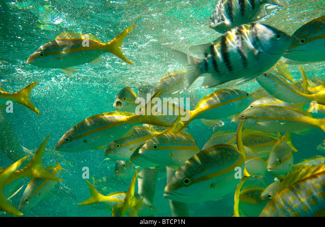 Coral reef cayo largo stock photos coral reef cayo largo for Caribbean reef fish