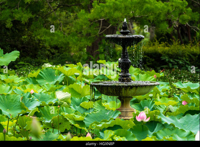 Fresh water sydney stock photos fresh water sydney stock for Fish ponds sydney