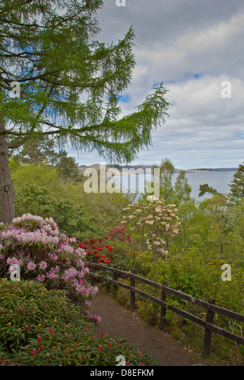 Inverewe scotland stock photos inverewe scotland stock for Garden trees scotland