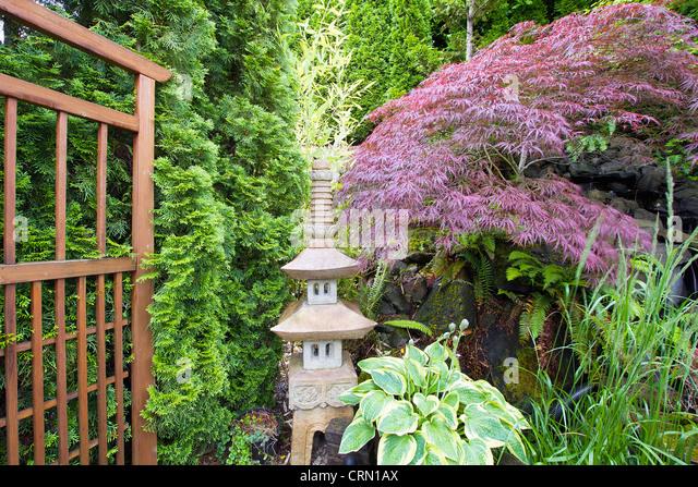 Japanese Inspired Garden With Stone Pagoda Trellis And Maple Tree   Stock  Image