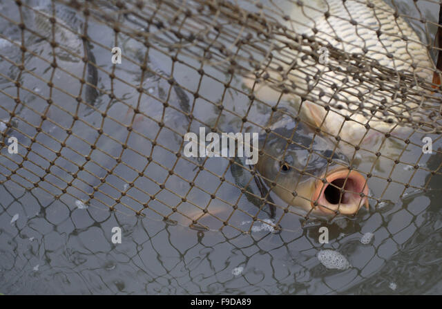 Gill net fishery stock photos gill net fishery stock for Gill net fishing