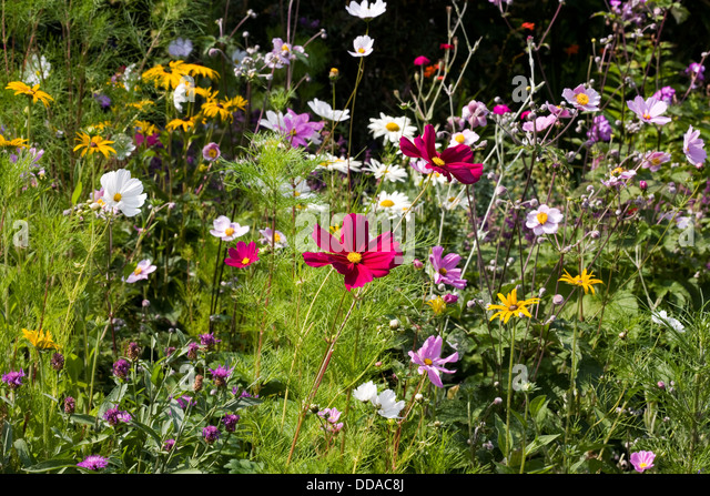 Flowers In An English Cottage Garden