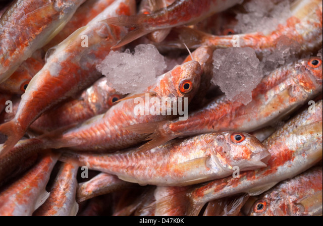 Red mullet fishmonger stock photos red mullet fishmonger for Red mullet fish