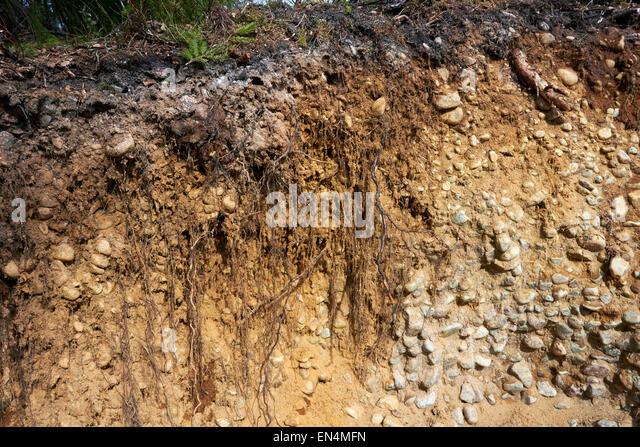 Cross section soil stock photos cross section soil stock for Where is soil found