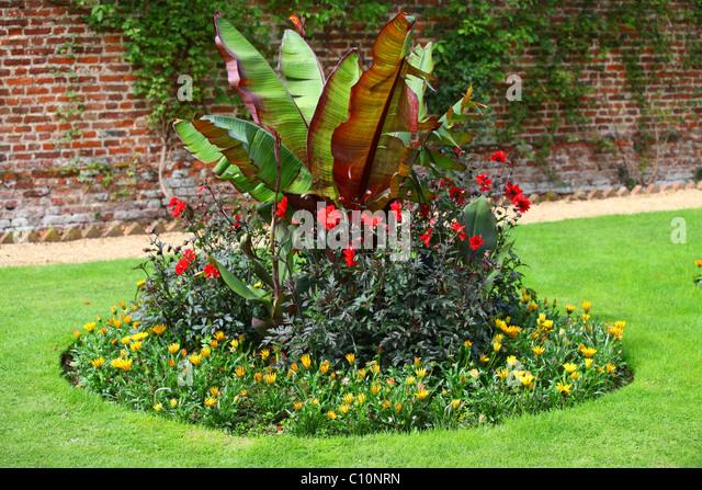 Banana Plants Garden Stock Photos Banana Plants Garden Stock