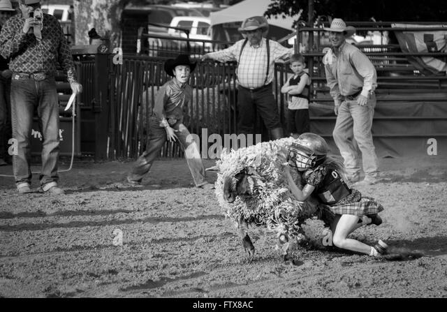 Mutton Busting Stock Photos Amp Mutton Busting Stock Images
