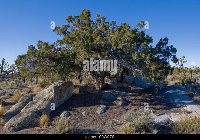 Mojave desert water stock photos mojave desert water for California chiude l utah